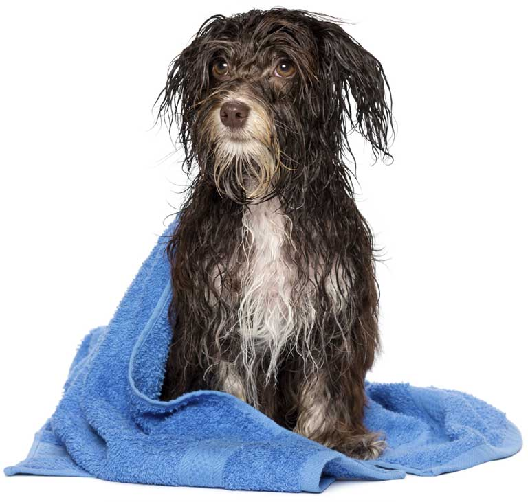 Professional Mobile Dog Grooming With Individual Treatments Available